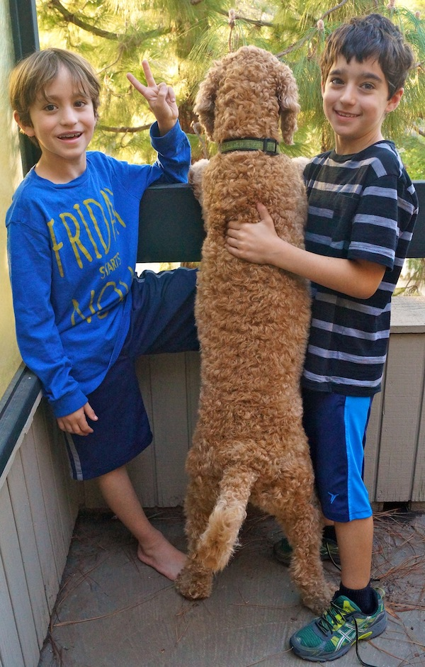 ~ my adorable boys and our dog, Maple ~