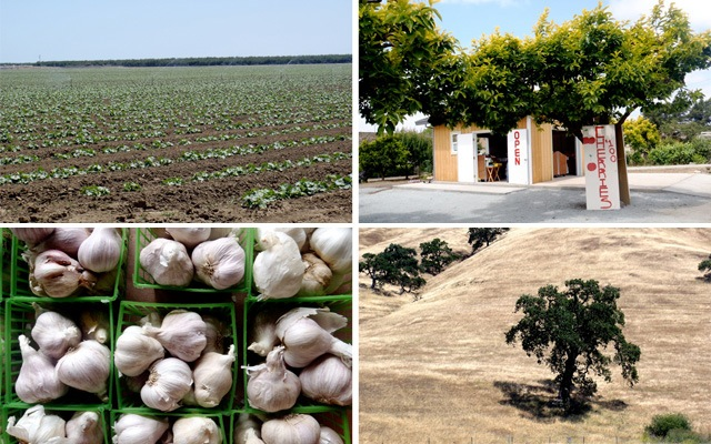 collage of farmlands in Gilroy, California - fiels, green plastic containers of garlic