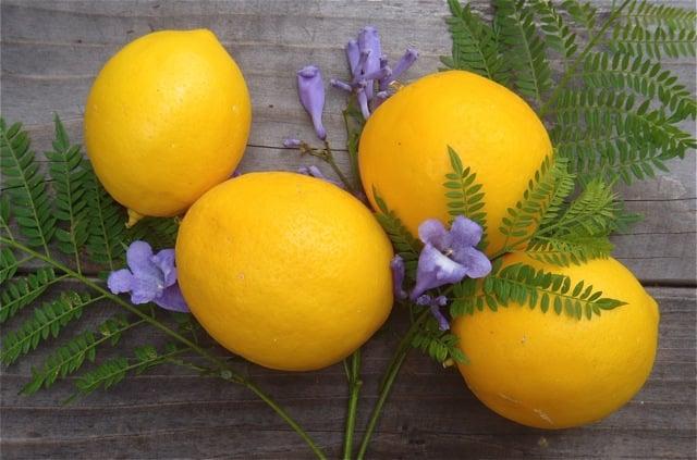 My Mom's Meyer Lemonade Recipe