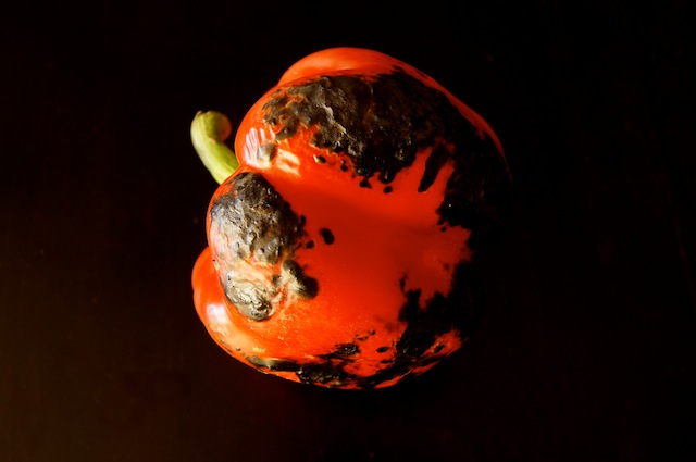 One charred red pepper.