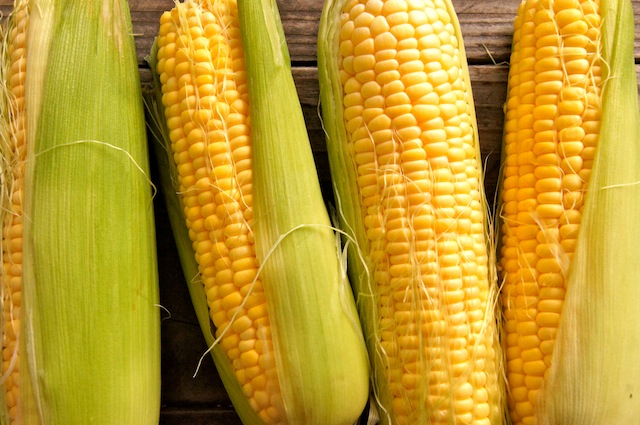 4 ears of yellow corn partially in husks