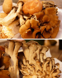 Sherried Wild Mushrooms with Creamy Parmesan Polenta Recipe