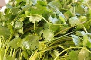 Cilantro | Cooking On The Weekends