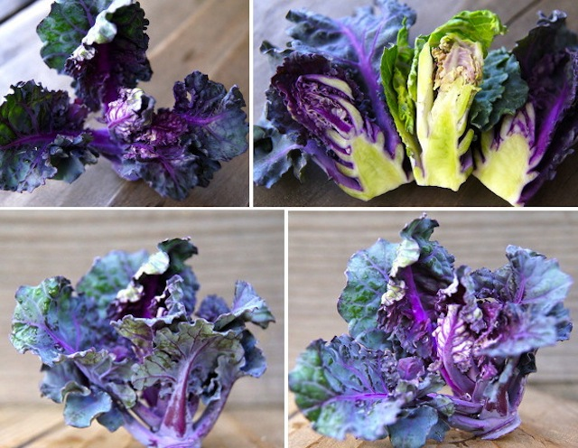 purple and green Kale Sprouts on wood table