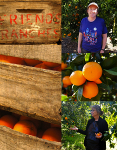 Ojai Pixie Tangerines | Cooking On The Weekends