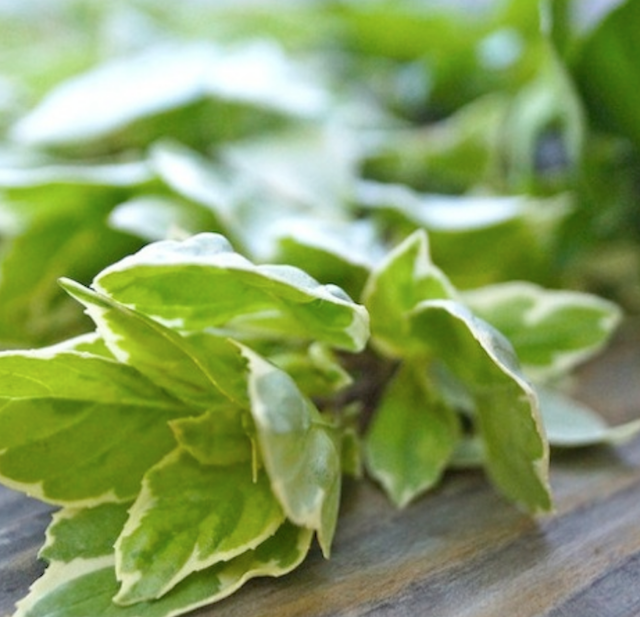 bunch of pesto basil sprigs on wooden surface