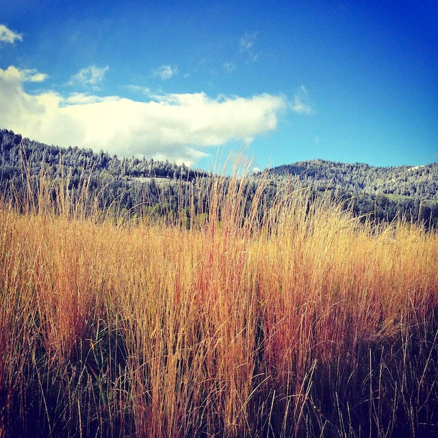dry grass and a blue sky in Teton Springs, Idaho