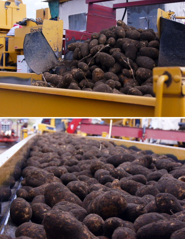 Idaho Potato Harvest Tour Day Two