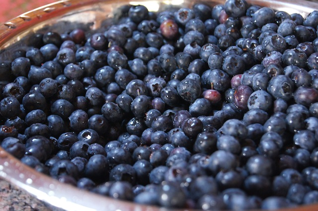 Thanksgiving Blueberries