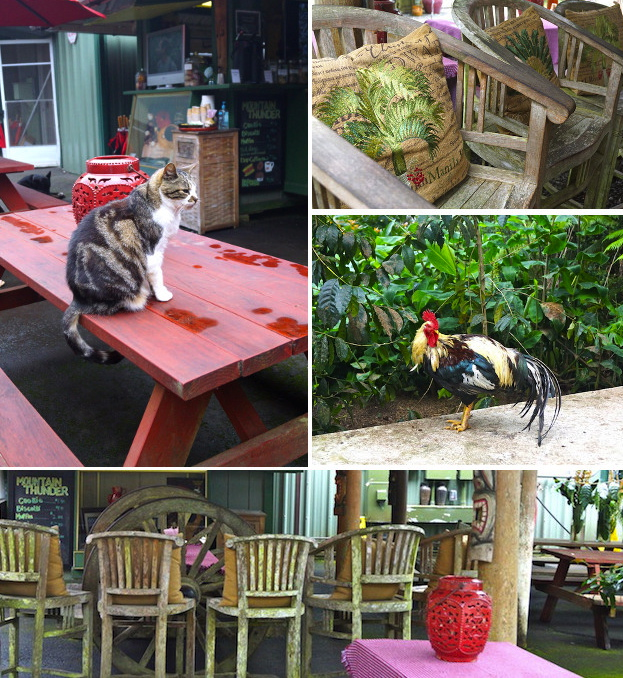 animals and cool chairs around Mountain Thunder Kona Coffee facility