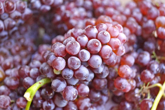 fresh bunches of champagne grapes