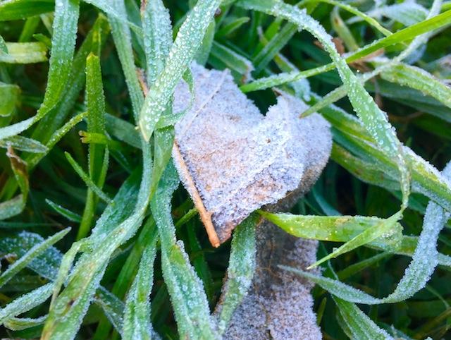 Frost in LA