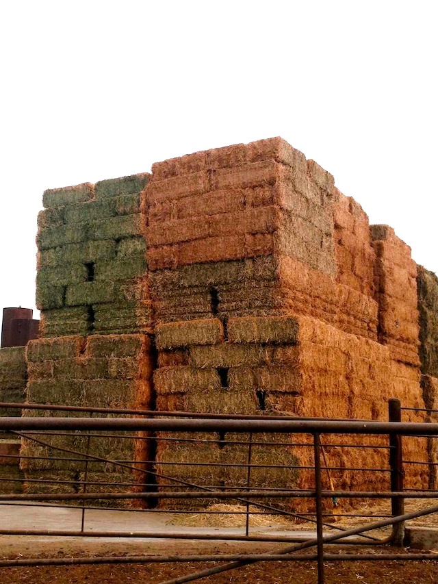 piles of hay at the Bootsma Dairy Farm in California