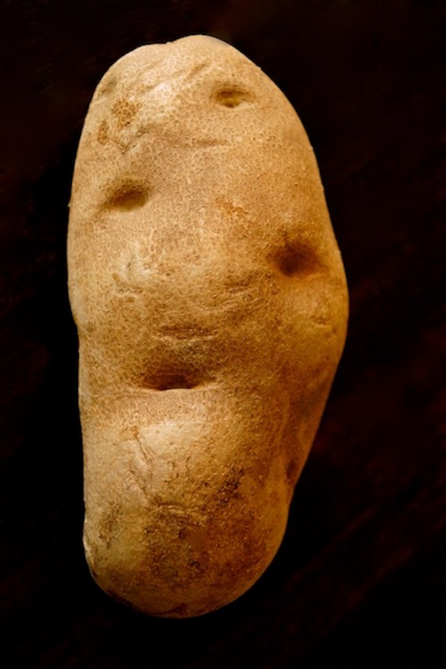 ond large russet potato with black background