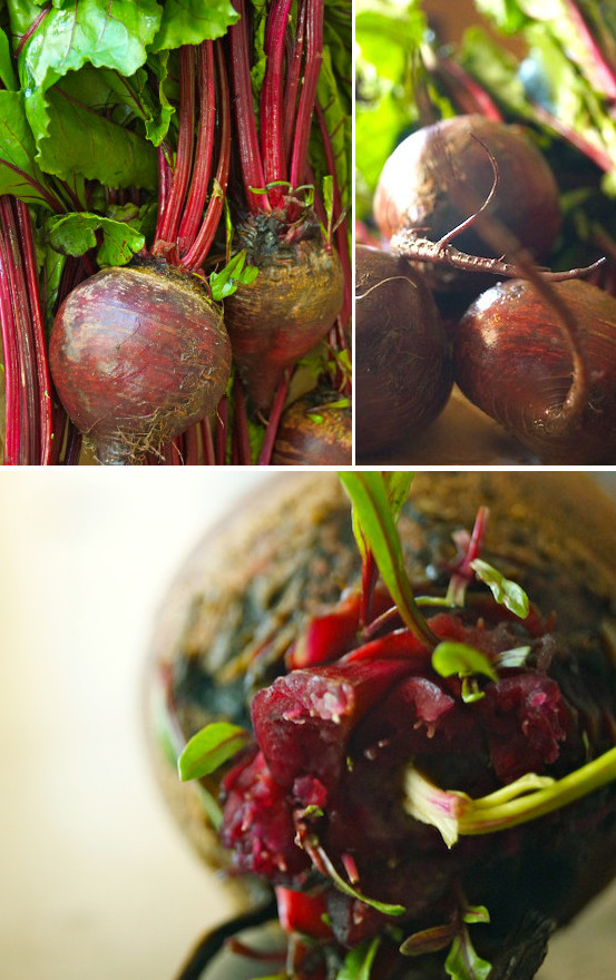 Collage of 3 images of fresh beets with bright green leaves.