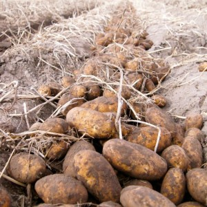 Idaho Potatoes Through The Seasons