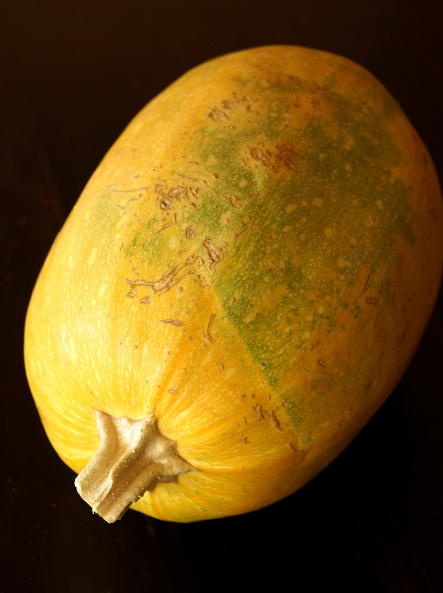 One yellow-greenish, whole Spaghetti Squash, with black background.