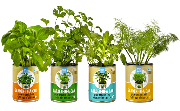 Gifts for the Cook Who You Think Has Everything - organic herbs in windowsil cans