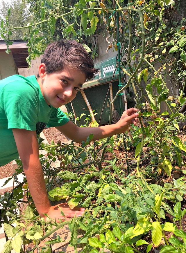 Valentina's son in the garden picking tomatoes.