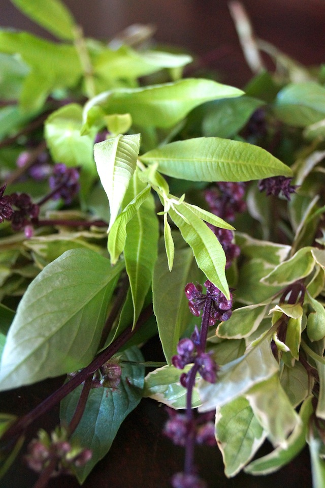 Fresh Lemon Verbena, purple flowering, Thai Basil and Pesto Basil in a bundle for Basil-Lemon Verbena Pesto Recipe.