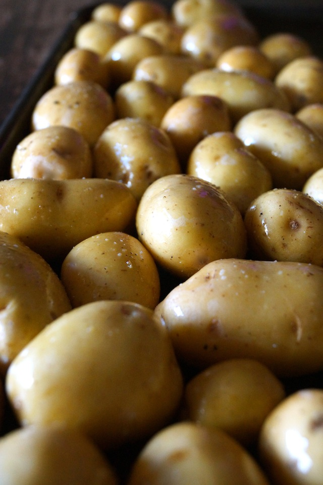 Dozens of oiled and salted, raw Dutch Yellow Potatoes on a baking sheet.
