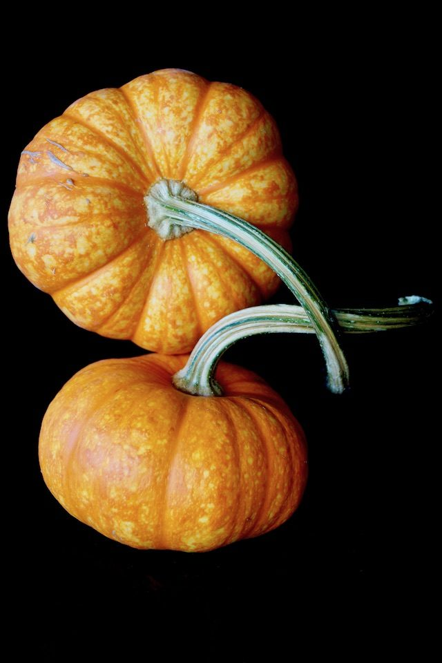 two super pretty pumpkins with the stems intertwined
