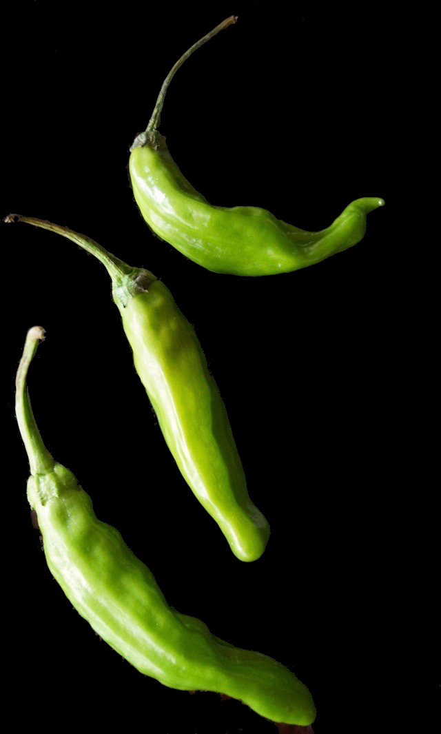 3 raw shishito peppers on a black background.