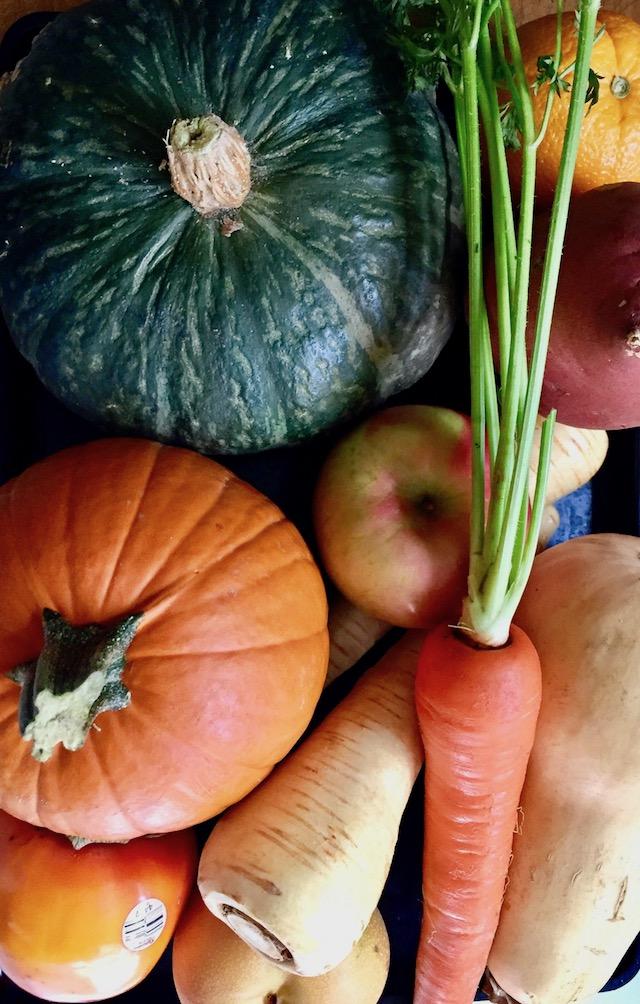fresh procuce, including pumpkin, carrot, apple, sweet potato, Kabocha squash, parsnip and butternut squash
