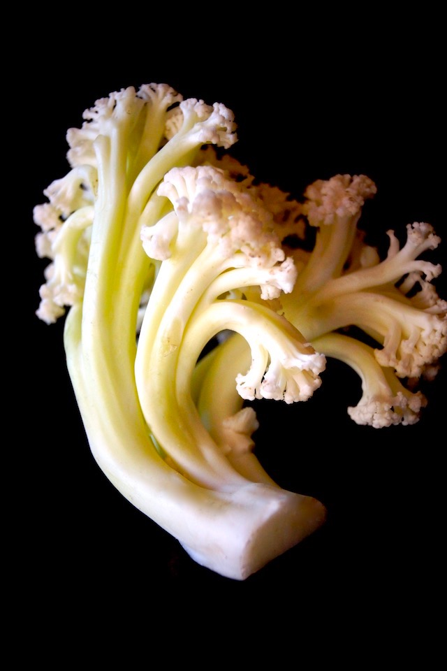 One small piece of Fioretto - flowering cauliflower, on a black background.