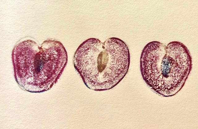 Drawing of three Elephant Heart plum halves.