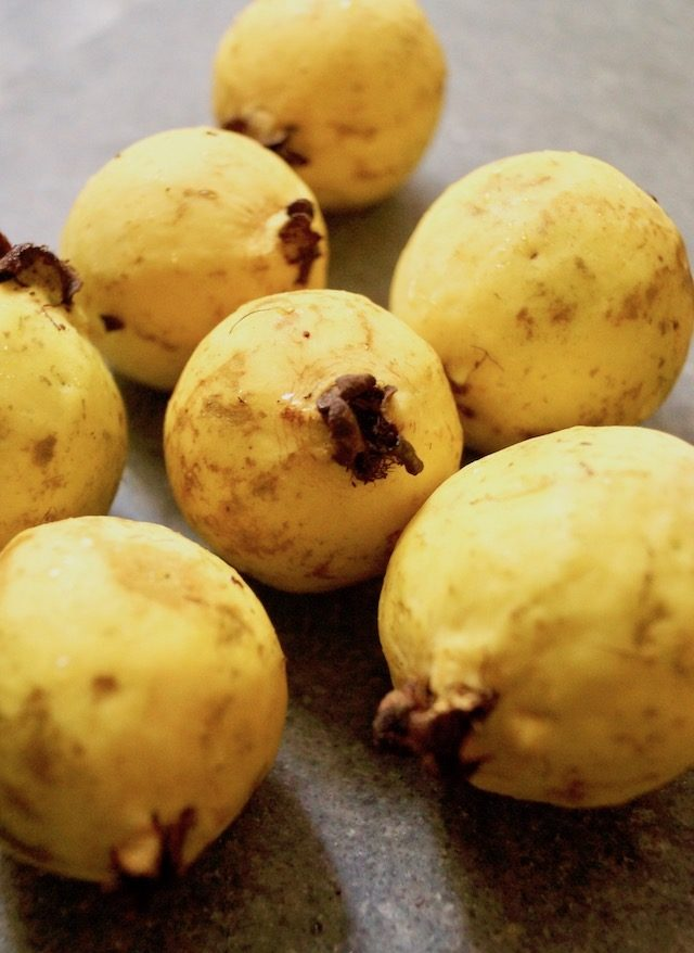 Yellow Mexican Cream Guavas on a grey background