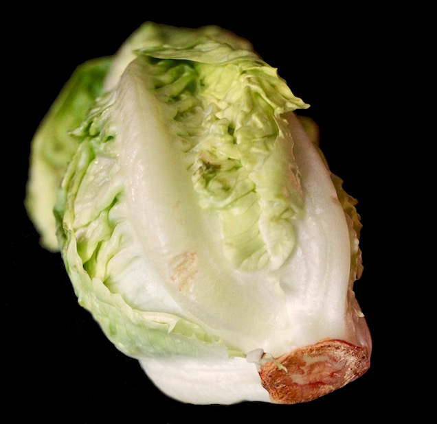 one head of little gem lettuce on black background